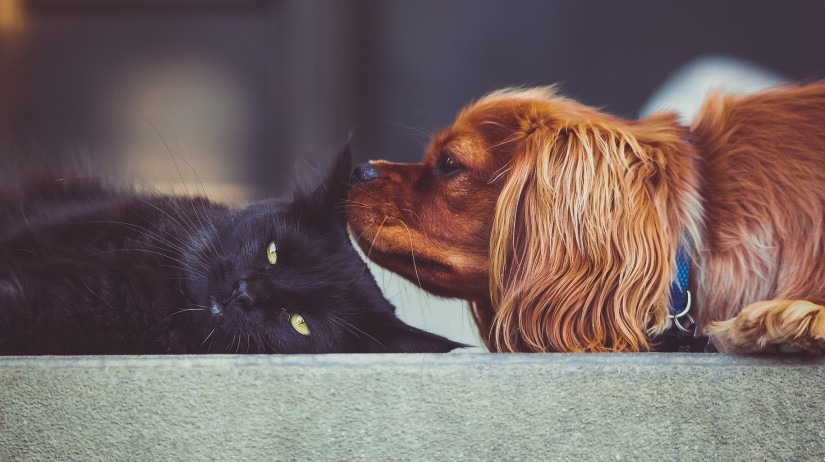 Hromadná vakcinácia psov a mačiek proti besnote